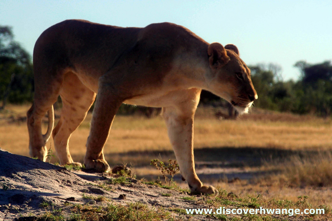 Discover Hwange Wildlife Safaris